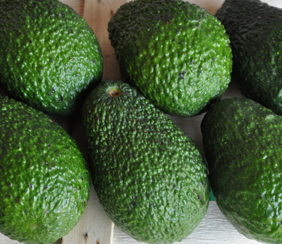 Avocados Hass St