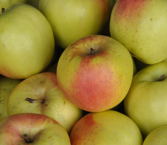 pommes Cloche