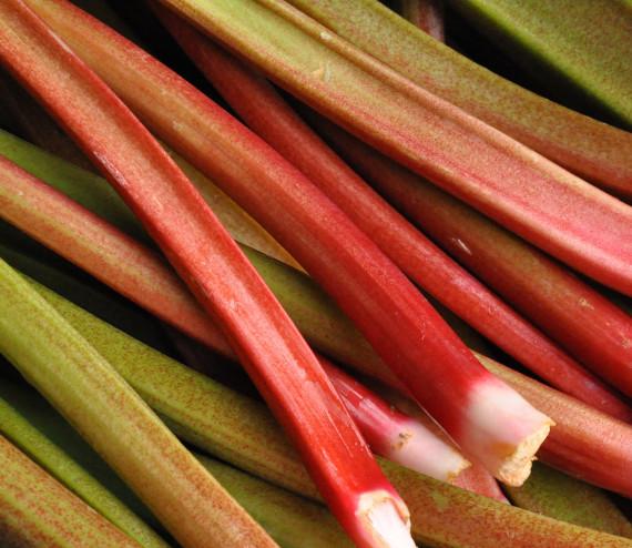 Rhubarbes