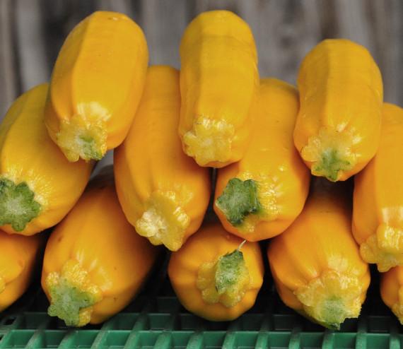 Courgette jaune (moyenne)