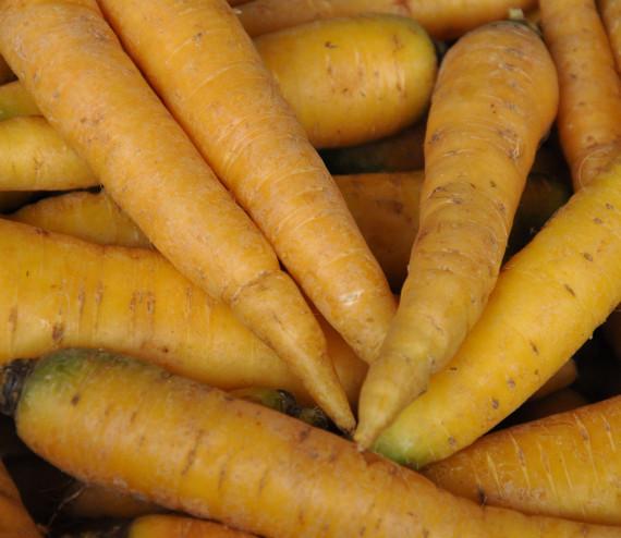 Carottes du Palatinat jaune
