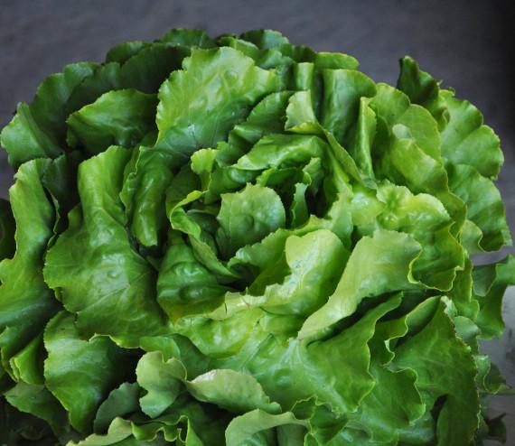 Kopfsalat gr